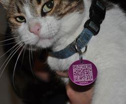 Cat-Code