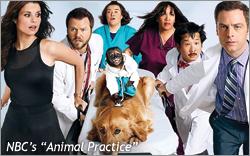 AnimalPractice-2_1