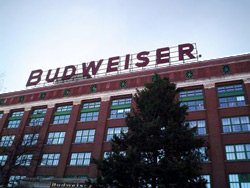 Budweiser-Plant