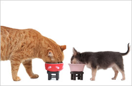 Cat-and-Dog-eating-Shutterstock-B