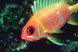 Fish-B