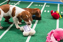 Puppy-Bowl