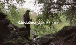 Caribou-coffee-B